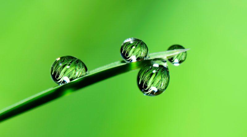 растение с капки вода