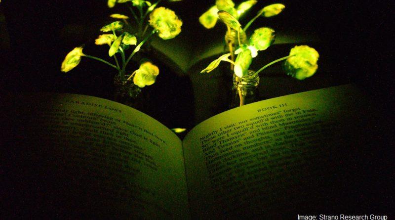 осветено растение
