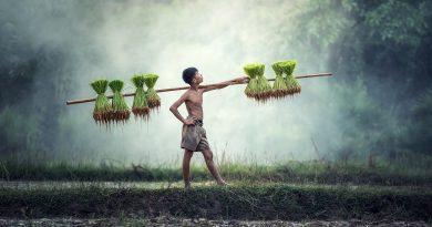 дете в селското стопанство