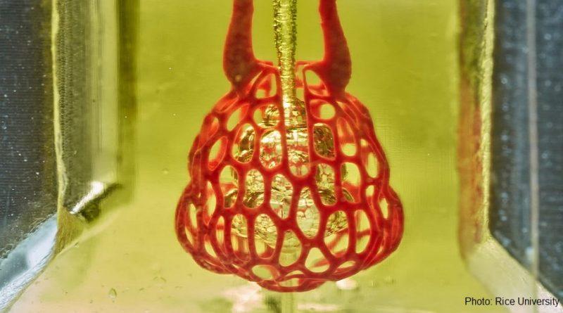 3D печат на бял дроб
