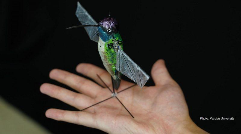 робот - колибри