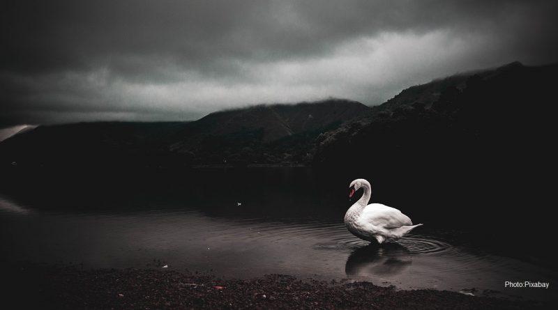 птица в мръсно езеро