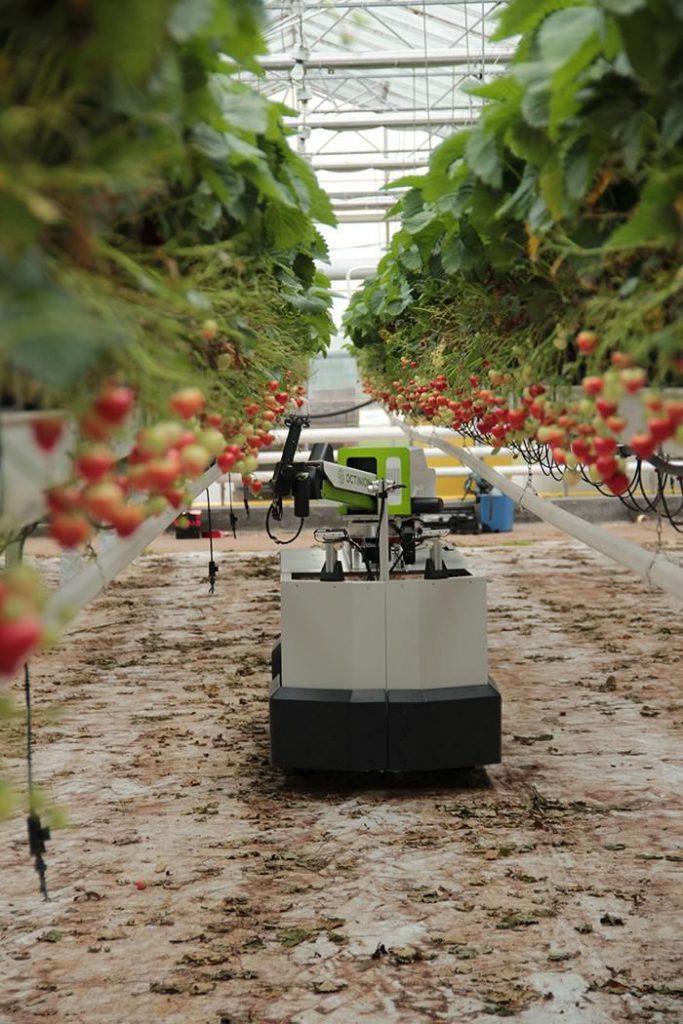 Роботът Rubion събира узрели плодове