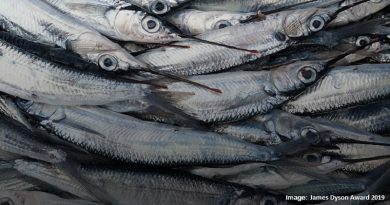 уловени риби