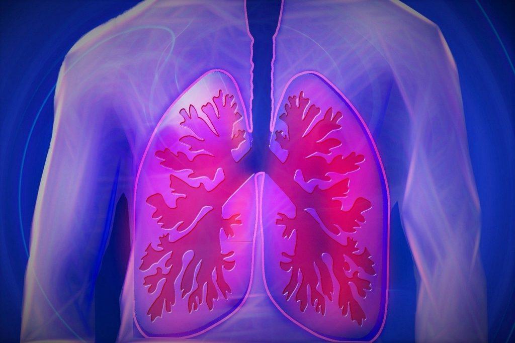 бял дроб на човек