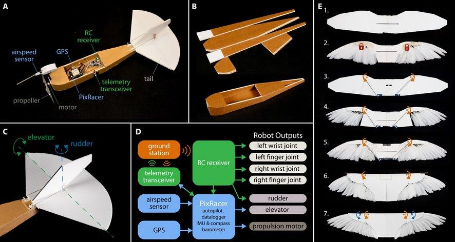 описание на конструкцията на робо-гълъба