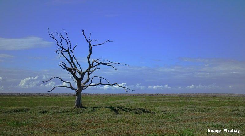 сухо дърво